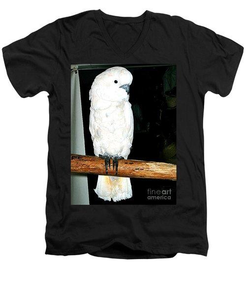 White Cockatiel-loreto Mx. Men's V-Neck T-Shirt by Jay Milo