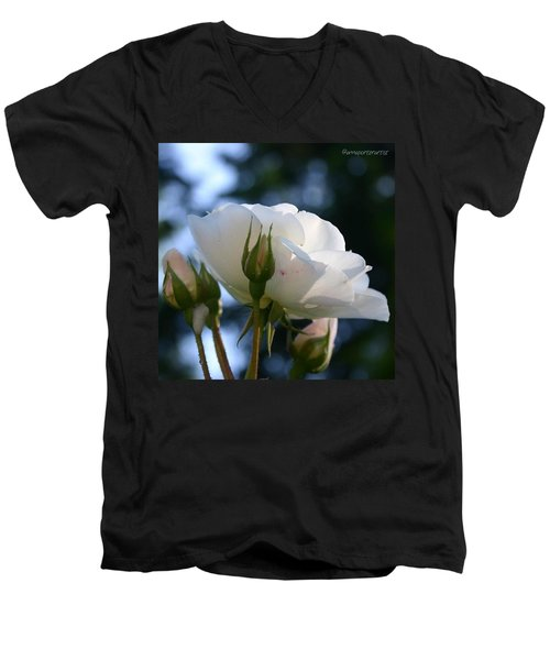 White Rose And Rosebuds In Anna's Gardens Men's V-Neck T-Shirt
