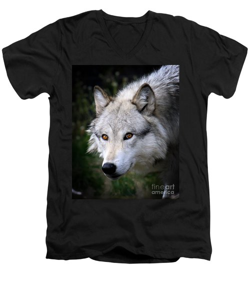 Men's V-Neck T-Shirt featuring the photograph Wolf Stare by Steve McKinzie