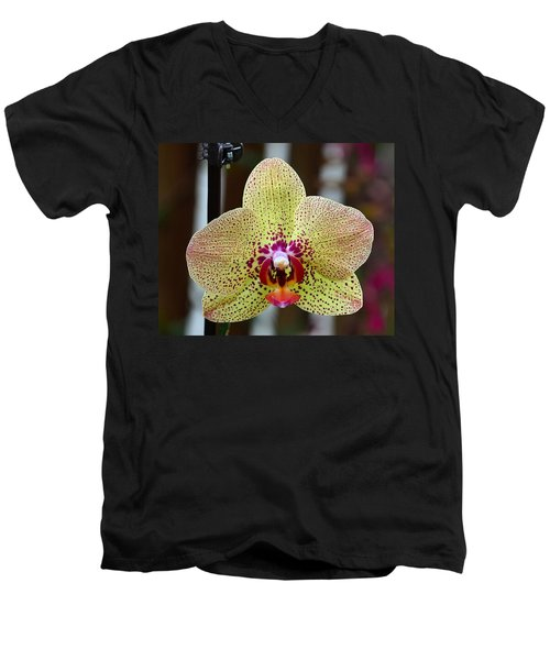 Yellow And Maroon Orchid Men's V-Neck T-Shirt by Kathy Eickenberg