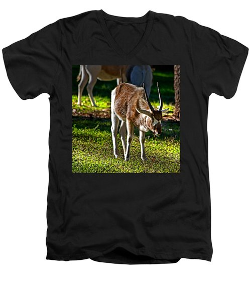 Youngster Addax Men's V-Neck T-Shirt