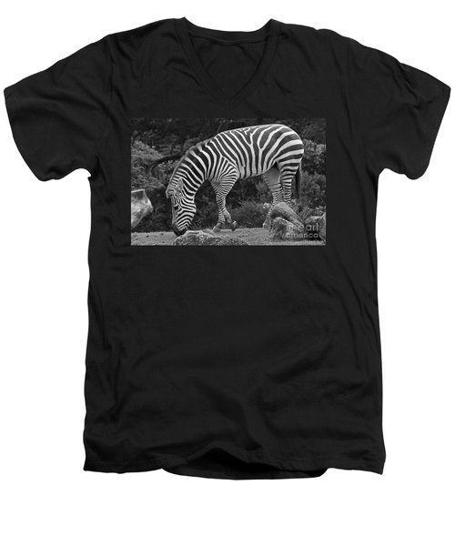 Men's V-Neck T-Shirt featuring the photograph Zebra In Black And White by Kate Brown