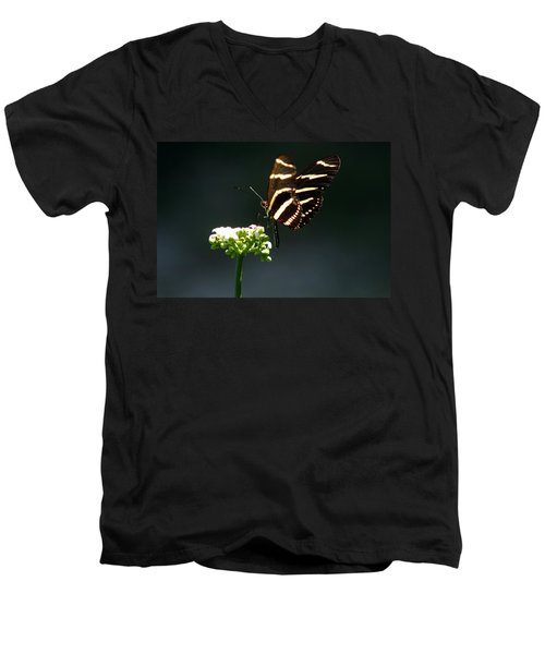Zebra Longwing Men's V-Neck T-Shirt by Greg Allore