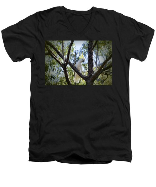 Sulphur Crested Cockatoo Men's V-Neck T-Shirt by Douglas Barnard