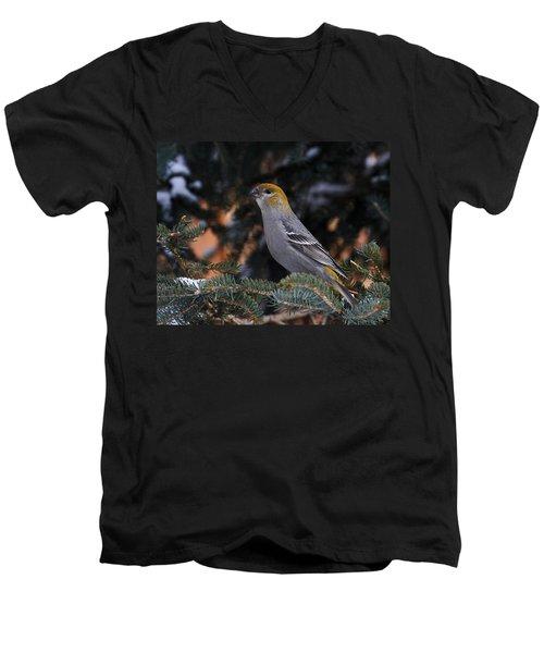 Female Pine Grosbeak Men's V-Neck T-Shirt