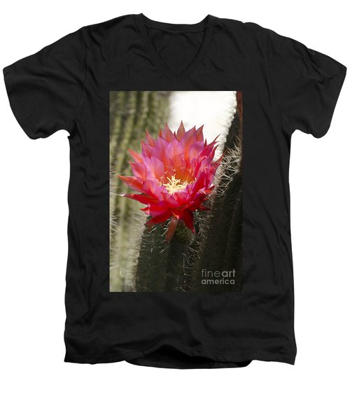 Red Cactus Flower Men's V-Neck T-Shirt