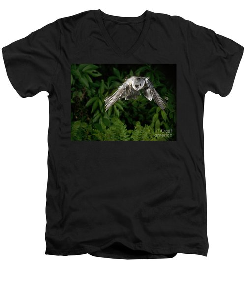 Tufted Titmouse In Flight Men's V-Neck T-Shirt