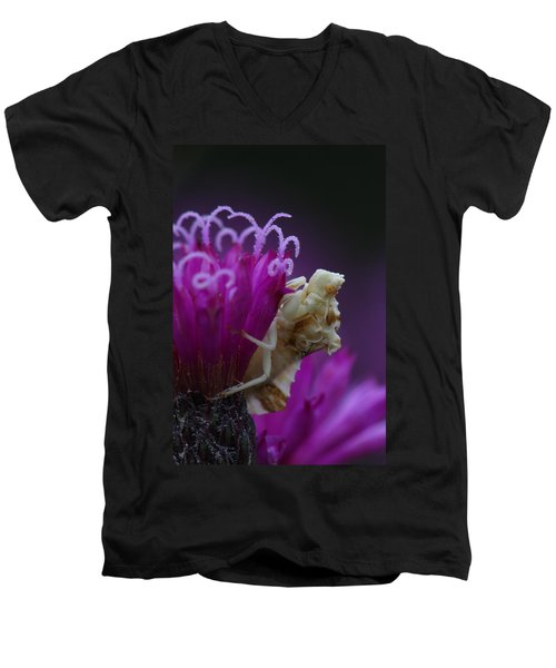 Ambush Bug On Tall Ironweed Men's V-Neck T-Shirt