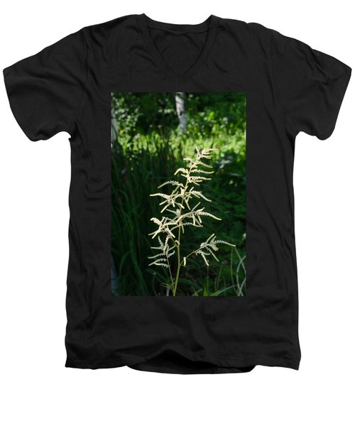 Aruncus Men's V-Neck T-Shirt