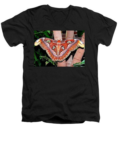 Atlas Moth Men's V-Neck T-Shirt