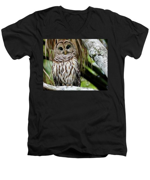 Barred Owl Men's V-Neck T-Shirt