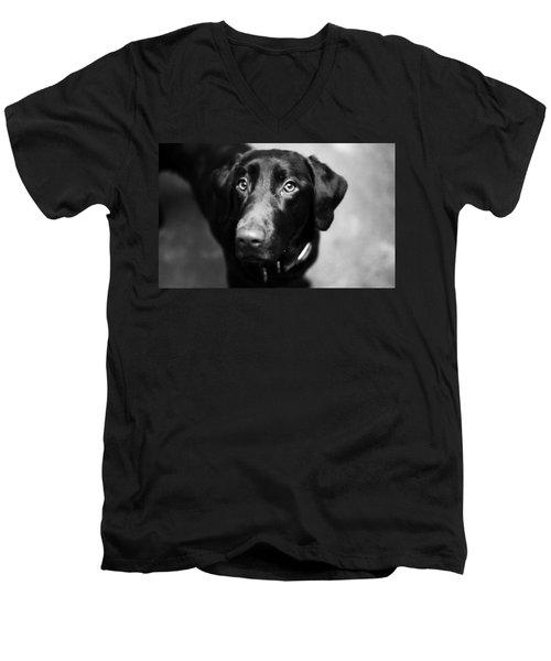Black Labrador  Men's V-Neck T-Shirt by Sumit Mehndiratta