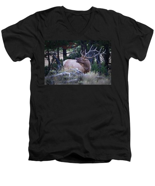 Bugling Bull Elk Men's V-Neck T-Shirt