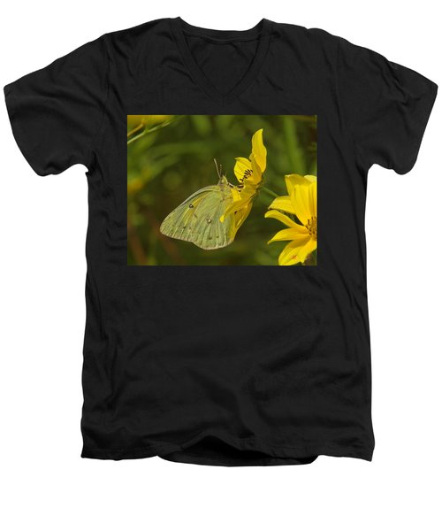 Clouded Sulphur Butterfly Din099 Men's V-Neck T-Shirt