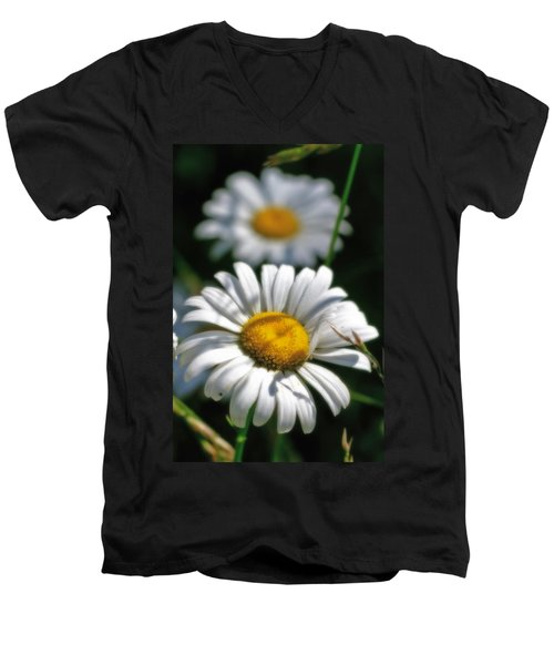 Daisies Aglow Men's V-Neck T-Shirt