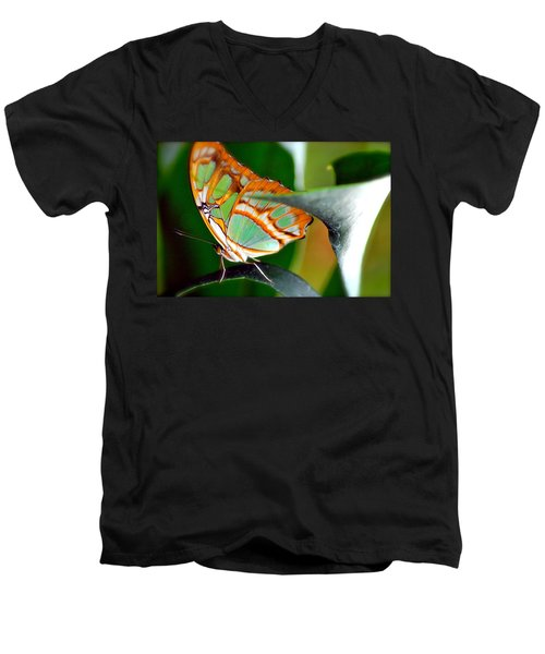 Men's V-Neck T-Shirt featuring the photograph Dido Longwing Butterfly by Peggy Franz