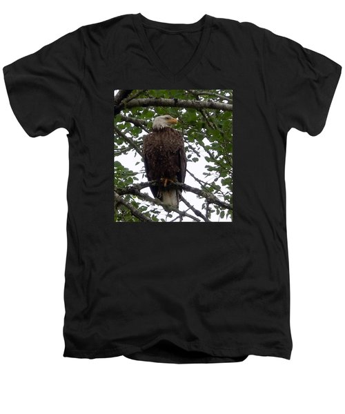 Eagle At Hog Bay Maine Men's V-Neck T-Shirt