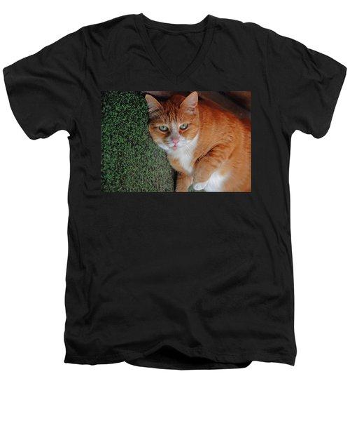 Fat Cats Of Ballard 6 Men's V-Neck T-Shirt