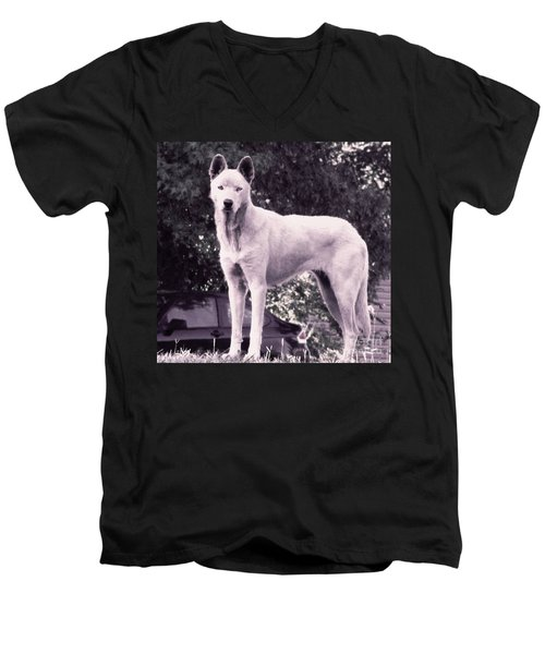 Men's V-Neck T-Shirt featuring the photograph Ghost The Wolf by Maria Urso