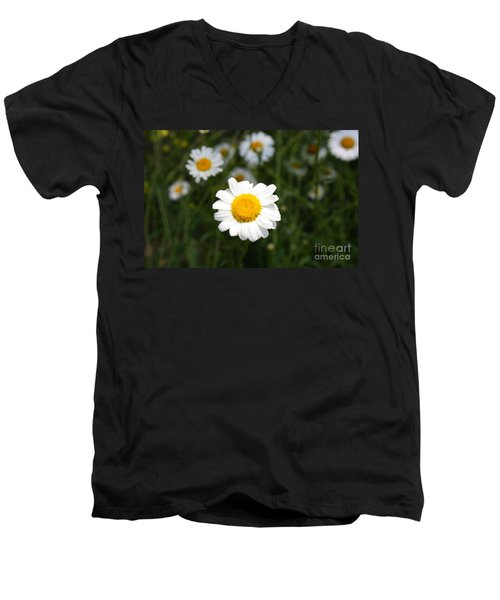 Men's V-Neck T-Shirt featuring the photograph Isn't That A Daisy by Tony Cooper