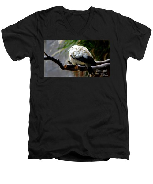 Men's V-Neck T-Shirt featuring the photograph Pied Imperial Pigeon by Davandra Cribbie