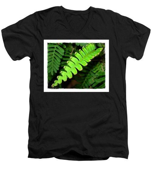 Polypody Men's V-Neck T-Shirt by Judi Bagwell