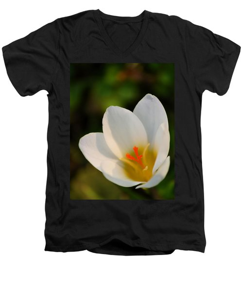 Pretty White Crocus Men's V-Neck T-Shirt