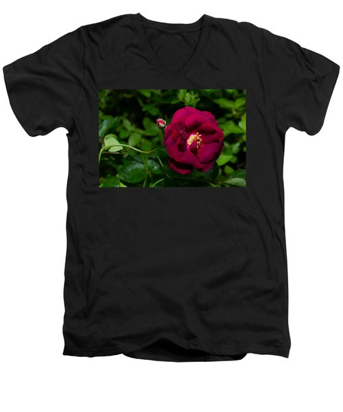 Red Rose In The Wild Men's V-Neck T-Shirt