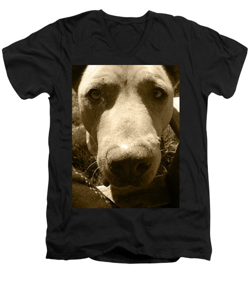 Men's V-Neck T-Shirt featuring the photograph Roscoe Pitbull Eyes by Kym Backland