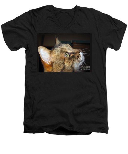 Men's V-Neck T-Shirt featuring the photograph Runcius- The King Kitty by Ausra Huntington nee Paulauskaite