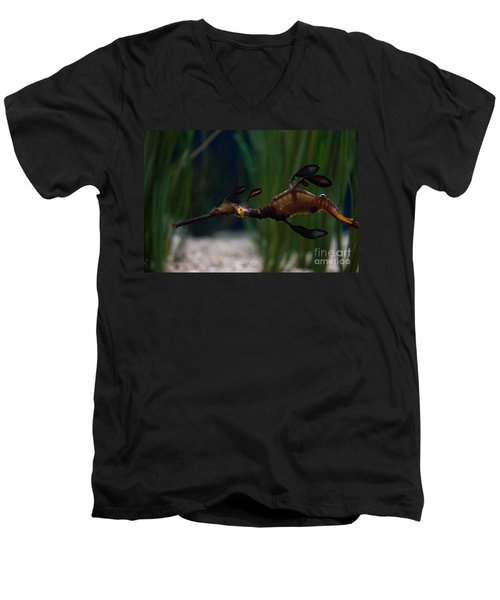 Sea Dragons Men's V-Neck T-Shirt
