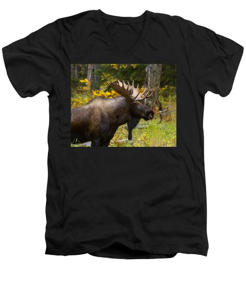 Men's V-Neck T-Shirt featuring the photograph Standing Proud by Doug Lloyd