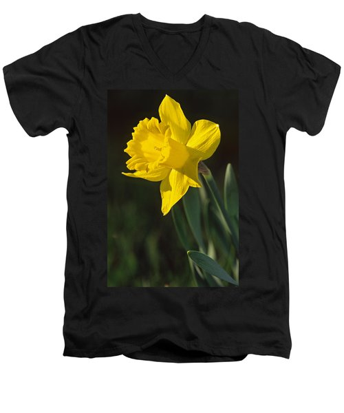 Trumpeting Daffodil Men's V-Neck T-Shirt