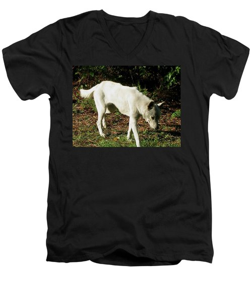 Men's V-Neck T-Shirt featuring the photograph Wolf 2 by Maria Urso