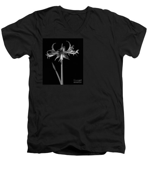 Amaryllis 'quito' Men's V-Neck T-Shirt