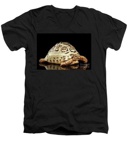 Men's V-Neck T-Shirt featuring the photograph Closeup Leopard Tortoise Albino,stigmochelys Pardalis Turtle With White Shell On Isolated Black Back by Sergey Taran