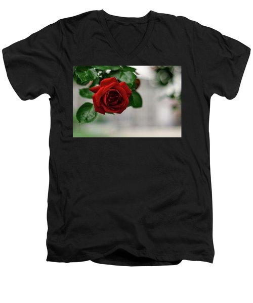 Roses In The City Park Men's V-Neck T-Shirt