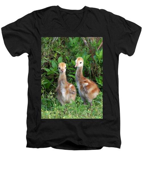 Sandhill Crane Chicks  Men's V-Neck T-Shirt by Chris Mercer