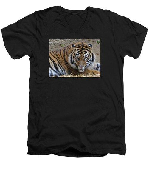 Staring Tiger Men's V-Neck T-Shirt