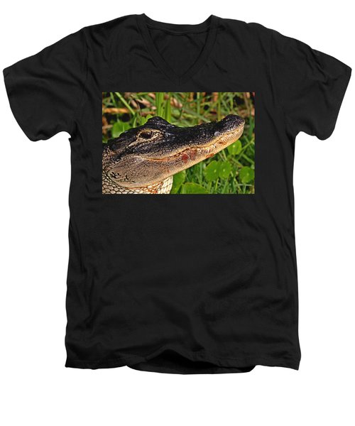 American Alligator Men's V-Neck T-Shirt