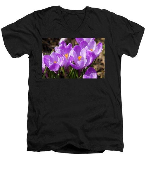 Purple Crocuses Men's V-Neck T-Shirt