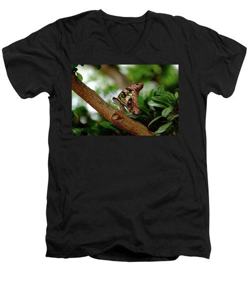 Tailed Jay Men's V-Neck T-Shirt by Ronda Ryan