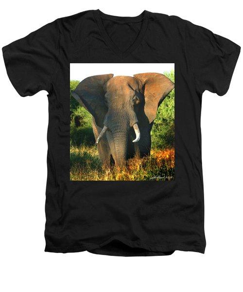 African Bull Elephant Men's V-Neck T-Shirt
