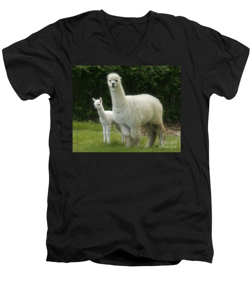 Alpaca And Foal Men's V-Neck T-Shirt