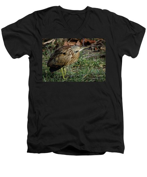 Men's V-Neck T-Shirt featuring the photograph American Bittern by Douglas Stucky