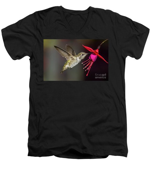 Anna Immature Hummingbird Men's V-Neck T-Shirt