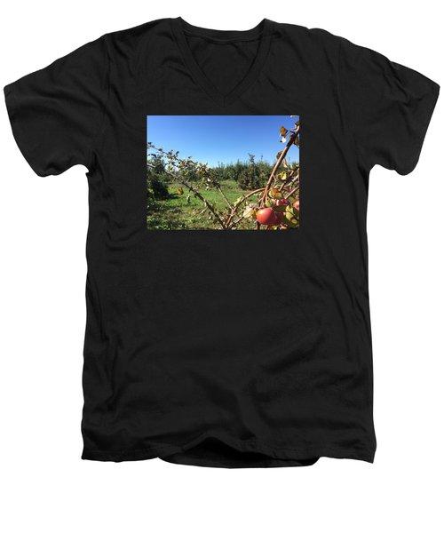 Apple Orchard 1 Men's V-Neck T-Shirt by Jason Nicholas