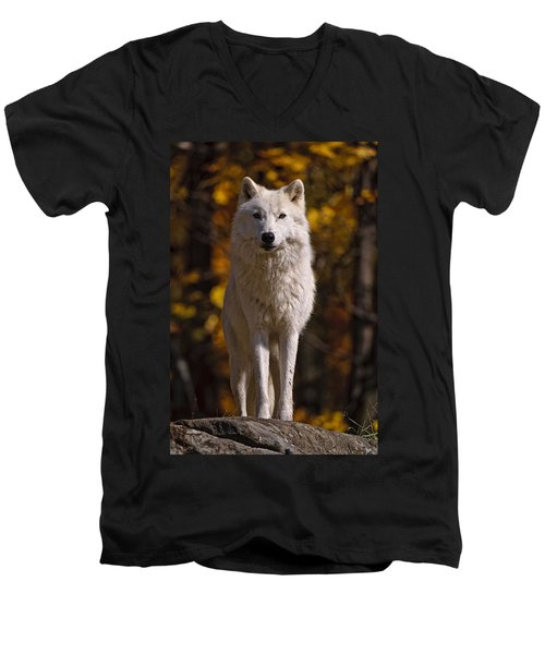 Men's V-Neck T-Shirt featuring the photograph Arctic Wolf On Rocks by Michael Cummings