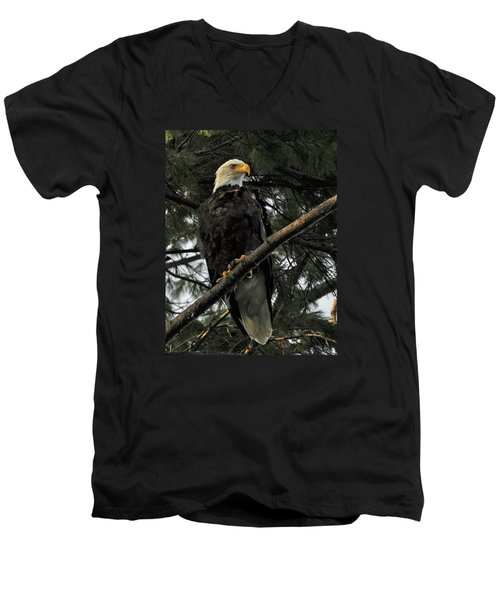 Men's V-Neck T-Shirt featuring the photograph Bald Eagle by Glenn Gordon