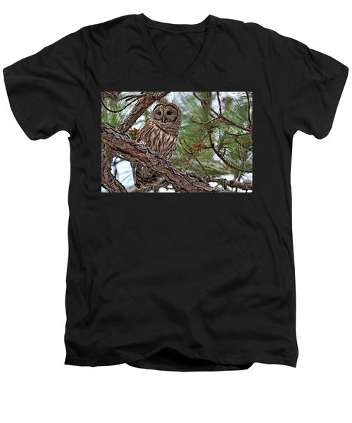 Barred Owl Perched In Tree Men's V-Neck T-Shirt